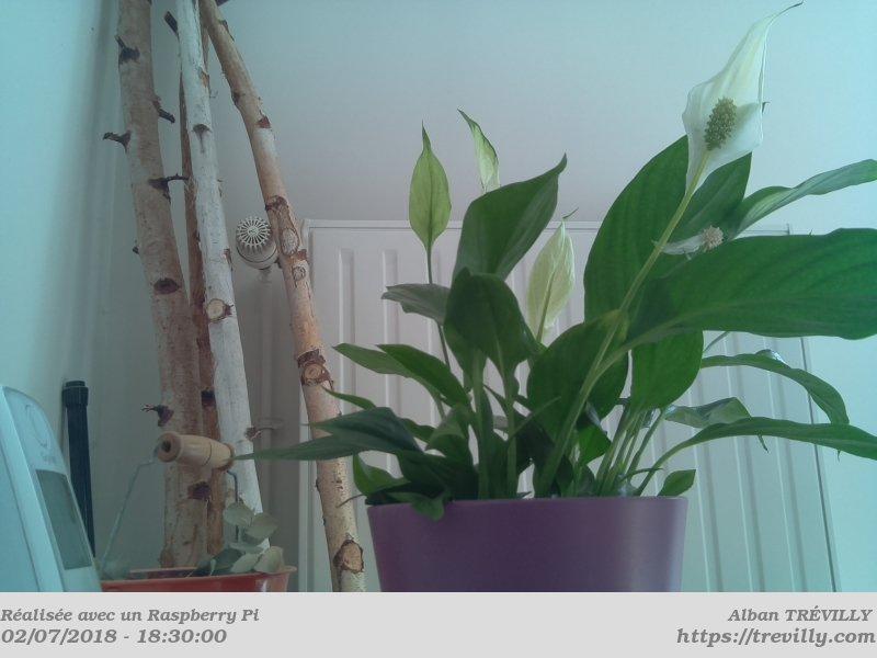 Photo de plantes avec le module caméra du Raspberry Pi